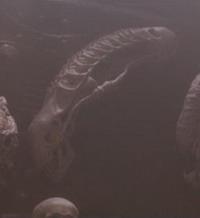 Trophy Cabinet Predator 2 Trivia