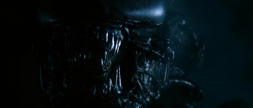 xenomorph Xenomorph (Adult Alien)