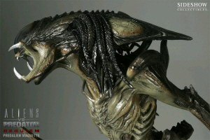 20071108 More Sideshow Predalien Pictures