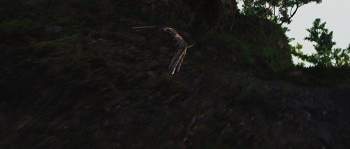 Mechanical Falcon Predators Mechanical Falcon