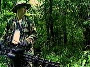 Predator Dark Jungle